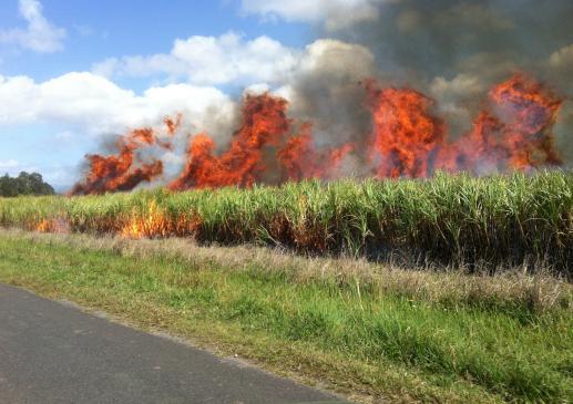 Jaka jest kara za wypalanie traw?