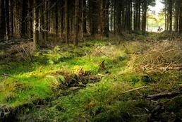 Inwentaryzacja zieleni - na czym polega, jakie są zasady zgłaszania?
