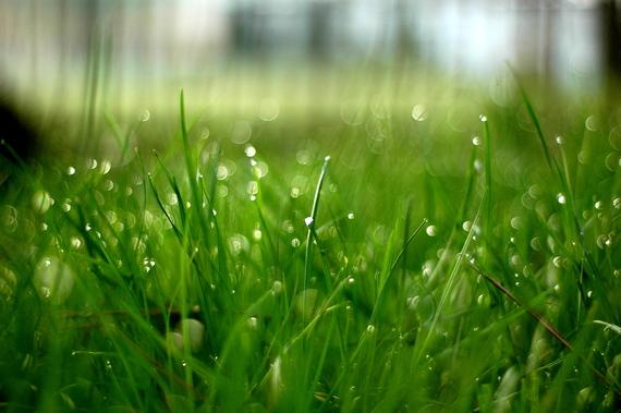 Jak usunąć plamy z trawy?