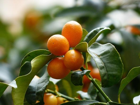 Jak usunąć plamy z pomarańczy?