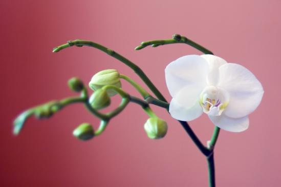 Kwiaty doniczkowe - jakie wybrać?