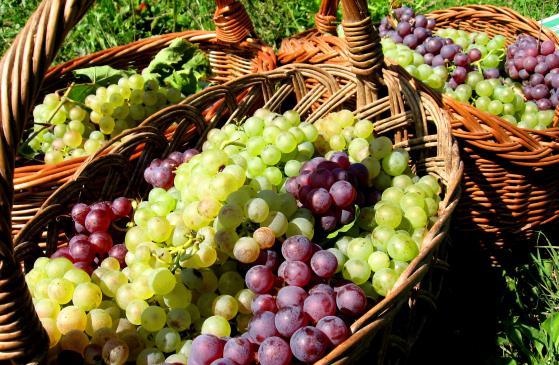 Domowe wino z winogron - przepis