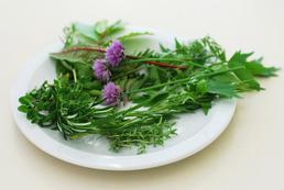 Jak leczyć ziołami?
