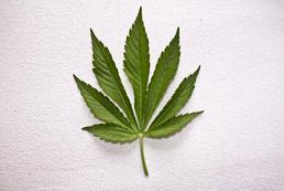 Jaka kara za posiadanie marihuany?