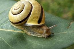 Jak zwalczyć ślimaki?