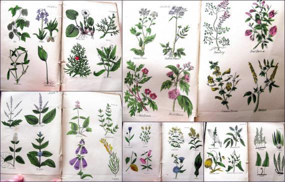 Homeopatia - za i przeciw
