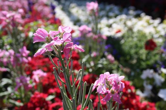Jakie są naturalne środki ochrony roślin?