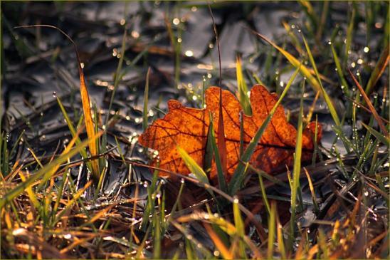 Jak pielęgnować trawnik jesienią?