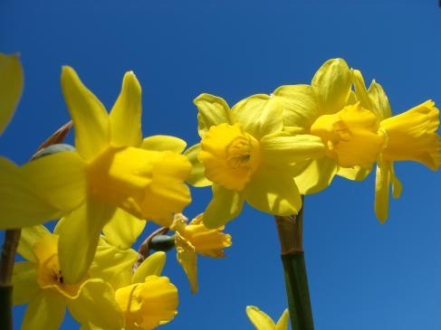 Sadzenie kwiatów cebulowych na wiosnę