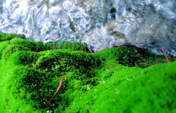 Algi morskie - działanie, właściwości