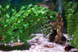 Rybki akwariowe - choroby