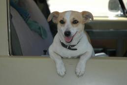 Jak wyrobić paszport dla psa?