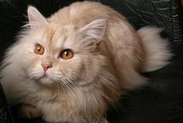 Choroby kotów - objawy