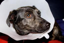 Choroby psów - objawy