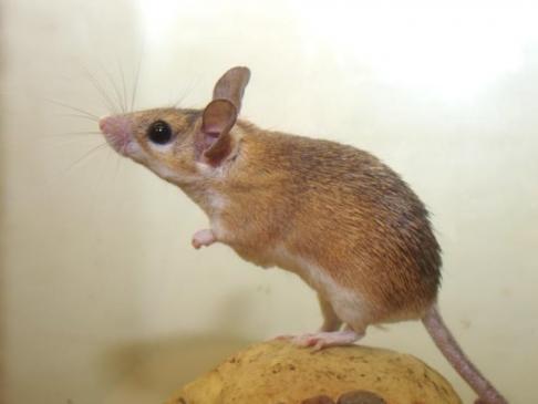 Choroby myszy domowych - profilaktyka i objawy