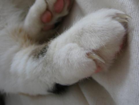 Jak oduczyć kota drapania?