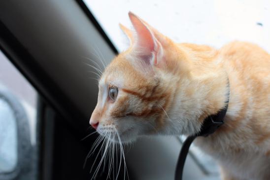 Jak przygotować kota do podróży?
