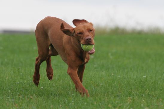 Jaką zabawkę kupić psu?