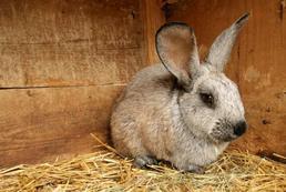 Jak wyposażyć klatkę dla królika?