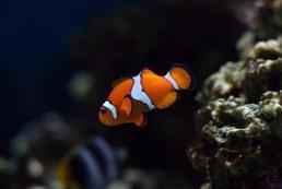 Jak wybrać rybki do akwarium?