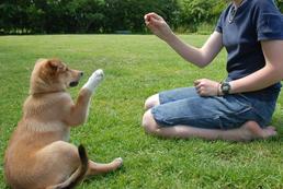 Jak tresować psa?