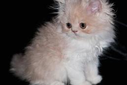 Adopcja kota – co warto wiedzieć