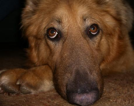 Adopcja psa - co warto wiedzieć?