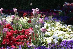 Jakie prace w ogrodzie latem?