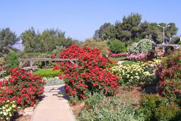 Jakie prace w ogrodzie na wiosnę?