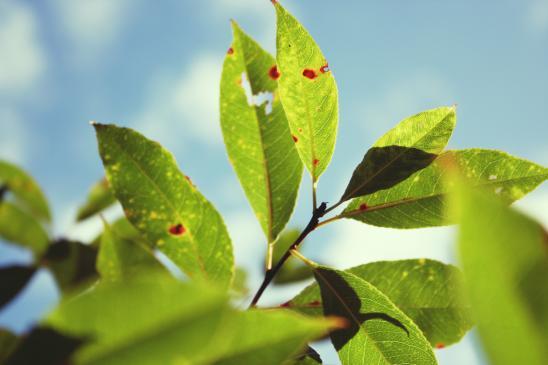 Szkodniki drzew owocowych i ich zwalczanie