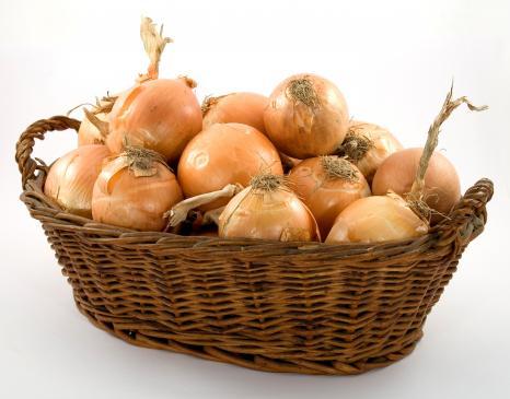 Cebula – sadzenie, uprawa, pielęgnacja
