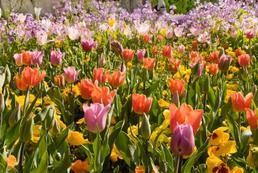 Jakie kwiaty wieloletnie do ogrodu?