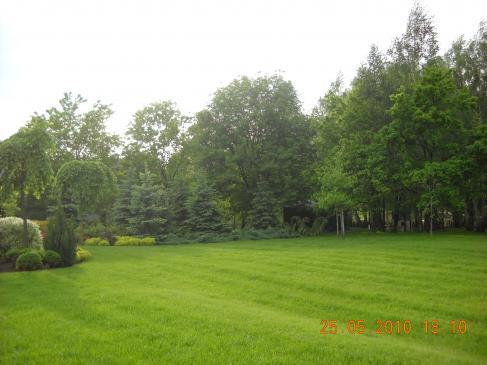 Jak wyrównać trawnik?