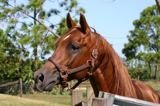 Jak kupić konia?