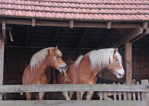 Czym karmić konia?