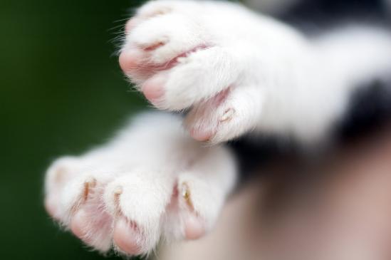 Jak obcinać paznokcie kotu?