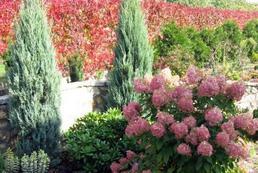 Jak zlikwidować hałas w ogrodzie?