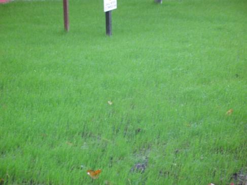 Jak drenować trawnik?