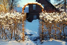 Jak ożywić ogród zimą?