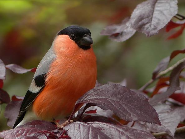 Jak zabezpieczyć ogród przed ptakami?