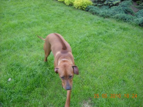 Jak chronić ogród przed psem?