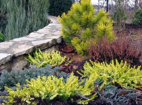 Jak rozmnażać rośliny przez podział?