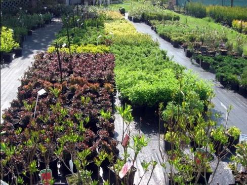 Jak rozmnażać rośliny przez odkłady?