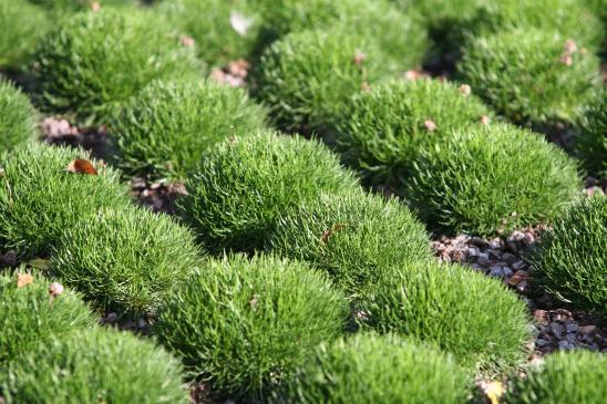 Jakie rośliny szybko rosną?