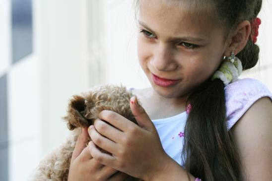 Dziecko męczy zwierzęta