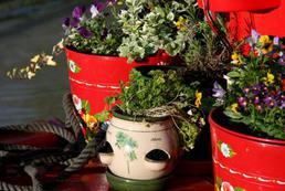 Szwedzkie zioła – zastosowanie