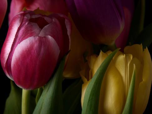Jak dobrać kwiaty do okazji?
