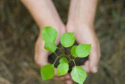 Jak nauczyć dziecko troski o środowisko?