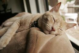 Jak zabezpieczyć mieszkanie przed kotem?
