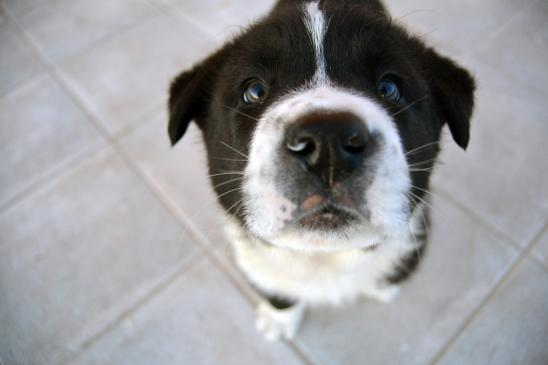 Alergia u psa - objawy